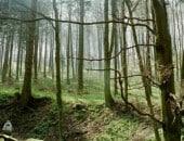 Bärlauch-Wanderung im Eichtertal