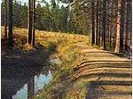 Bleesweg
