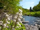 Blühendes Flussufer