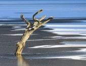 Der wohl bekannteste Baum im Pürmer Land: Der tote Baum im Wascheider Stausee