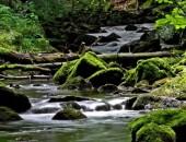 Die urig schönen 5-Wasserfälle bei Müllenborn.