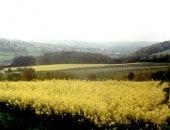 Eifellandschaft im Mai