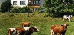 Ferienwohnung Sonnenblume**** auf dem Schmiedshof