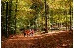 Fotoexkursionen und Fotoseminare im Nationalpark Eifel