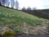 Frühling im Perlenbachtal