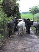 Geocaching zu Pferd & Wanderreiten