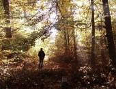 Herbst im Gerolsteiner Wald