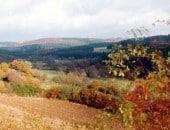 Herbst im Naturschutzgebiet Alfbachtal
