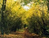 Herbstlicher Wanderweg bei Daun