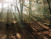 Herbstliches Licht im Buchenwald