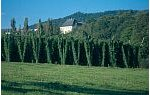 Hopfenanbau in der Eifel
