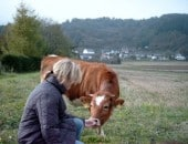Kuh zum Anfassen