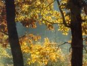 Lichtzauber im Herbstwald