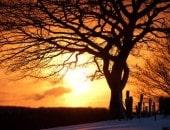 Mächtige Eiche im winterlichen Abendrot