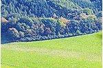 Mausauelwald