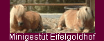Minigestüt Eifelgoldhof