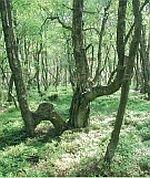Moor-Route: Teilroute Schneifel