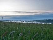 Morgentau auf dem Felde im Frühling