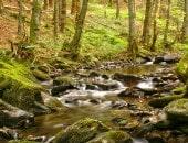 Romantischer Bachlauf im Nadelwald