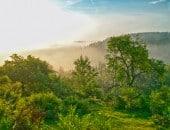 Saftig grüne Waldlichtung an einem nebligen Tag