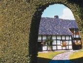 Typische Buchen-Haushecke in Monschau-Höfen