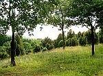 Wachholder-Naturschutzgebiet Geisert