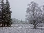 Waldlichtung im Winter