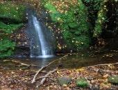 Wasserfall im Butzerbacher Tal bei Kordel.