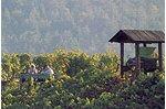 Weinbaulehrpfad