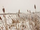 Windereinbruch im Hochmoor