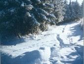 Winter im Prümtal