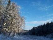 Winterimpression aus dem Simmerather Wald im Keltzerbachtal