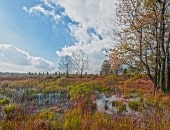 Wunderschöner Herbsttag im Hochmoor.
